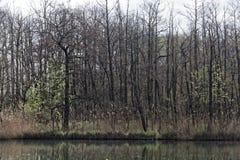 Pequeño lago en primavera Fotos de archivo libres de regalías