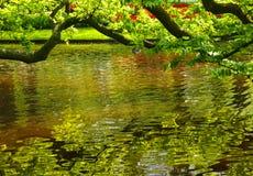 Pequeño lago en un parque Fotos de archivo