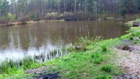 Pequeño lago en una reserva del amarrar almacen de metraje de vídeo