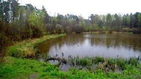Pequeño lago en una reserva del amarrar almacen de video