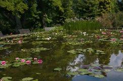 Pequeño lago idílico con las flores y el banco de loto Foto de archivo libre de regalías