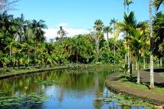 Pequeño lago tropical con las palmas alrededor Fotos de archivo