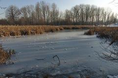 Pequeño lago winter en el parque del sur hermoso fotos de archivo libres de regalías