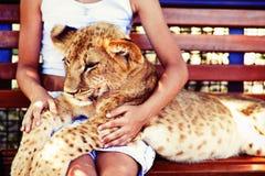 Pequeño león Simba imagenes de archivo