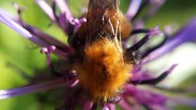 Pequeño manosee la abeja Imagenes de archivo