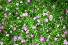 Pequeño modelo de flores rosado precioso hermoso con las hojas del verde adornadas Imagen de archivo libre de regalías