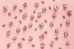 Pequeño modelo de las rosas en un fondo rosado Endecha plana, visión superior Imagenes de archivo