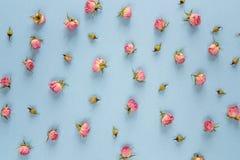 Pequeño modelo rosado de las rosas en un fondo azul Foto de archivo