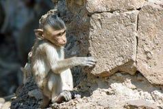 Pequeño mono Imagenes de archivo