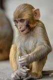 Pequeño mono Fotos de archivo libres de regalías