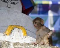 Pequeño mono en el fondo - un símbolo budista - ojos de B Fotos de archivo