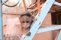 Pequeño mono en las escaleras Foto de archivo