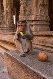 Pequeño mono en un templo budista Fotografía de archivo