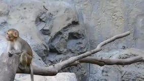 Pequeño mono lindo en parque zoológico almacen de metraje de vídeo