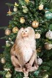Pequeño mono y el árbol del Año Nuevo Imagenes de archivo
