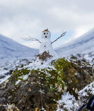 Pequeño muñeco de nieve en las montañas escocesas Imagen de archivo