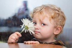 Pequeño muchacho caucásico con los ojos azules y el pelo rizado con f blanca foto de archivo libre de regalías