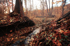 Pequeño mundo de la hada del otoño Fotografía de archivo libre de regalías