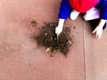 Pequeño niño que juega, expolring y cultivando un huerto en el jardín con el suelo, hojas, nueces, palillos, plantas, semillas du imagen de archivo