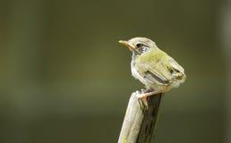 Pequeño pájaro Fotos de archivo