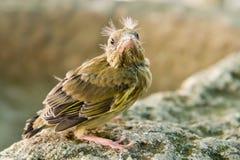 Pequeño pájaro Foto de archivo libre de regalías