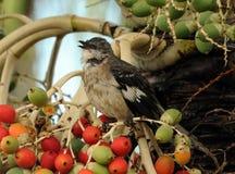 Pequeño pájaro Fotografía de archivo libre de regalías