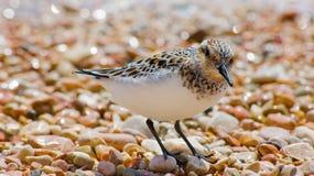 Pequeño pájaro Imagen de archivo