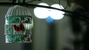 Pequeño pájaro cantante en la jaula bloqueada hermosa, decoración de la calle, detalle interior almacen de metraje de vídeo
