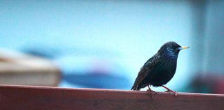 Pequeño pájaro colorido imagenes de archivo