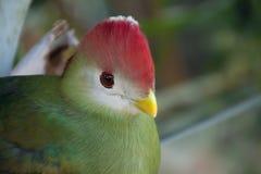Pequeño pájaro colorido tropical en el salvaje imagen de archivo