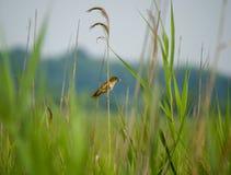 Pequeño pájaro con el gusano en hierba foto de archivo libre de regalías