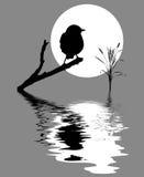Pequeño pájaro en árbol de la ramificación stock de ilustración