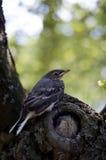 Pequeño pájaro en el árbol Imagen de archivo libre de regalías