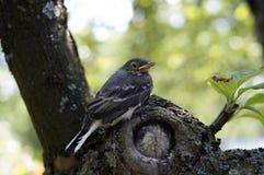 Pequeño pájaro en el árbol Foto de archivo libre de regalías