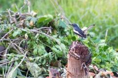 Pequeño pájaro en el árbol Fotos de archivo