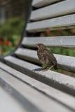 Pequeño pájaro en el banco Foto de archivo