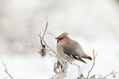 Pequeño pájaro en el invierno frío Fotos de archivo libres de regalías