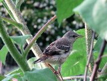 Pequeño pájaro en el jardín Fotos de archivo