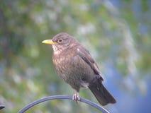 Pequeño pájaro en la cerca foto de archivo