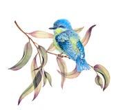 Pequeño pájaro en las ramas del eucalipto foto de archivo