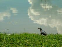 Pequeño pájaro en una orilla del lago Foto de archivo libre de regalías