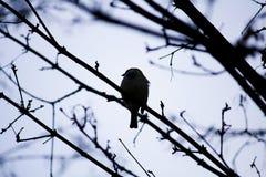 Pequeño pájaro en una rama Imagen de archivo