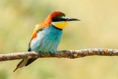Pequeño pájaro encaramado en una rama Imagenes de archivo