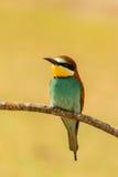 Pequeño pájaro encaramado en una rama Foto de archivo