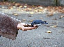 Pequeño pájaro lindo en la mano Foto de archivo