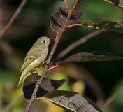 Pequeño pájaro lindo en una ramificación Fotos de archivo