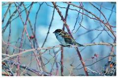 Pequeño pájaro Mañana fotos de archivo