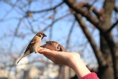Pequeño pájaro a mano Imagenes de archivo