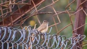 Pequeño pájaro que se sienta en la cerca imagen de archivo libre de regalías