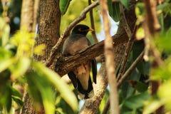Pequeño pájaro que se sienta en un árbol fotografía de archivo libre de regalías